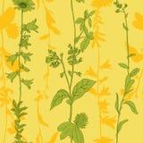 Herbal seamless pattern Stock Photo
