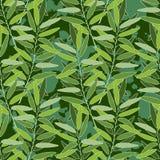 Herbal seamless pattern Stock Photos