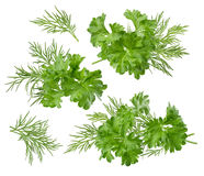 Herbal set path included isolated on white background. Herb dill parsley set path included isolated on white background as package design element stock images