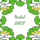 Herbal shop ginkgo in color Royalty Free Stock Photography