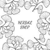 Herbal shop ginkgo Royalty Free Stock Photo
