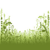 Herbal silhouette background Royalty Free Stock Photography
