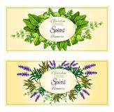 Herbal spices, herbs vector banners set Stock Photos