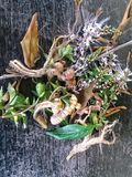 Herbal royalty free stock photo