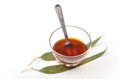 Herbal tea. Making with gum leaf royalty free stock images