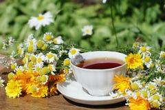 Herbal Tea Stock Image