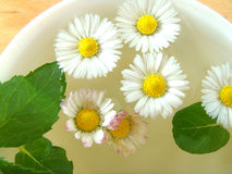 Herbal tea. Of mint, and daisies Royalty Free Stock Photography