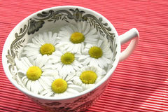 Herbal tea - camomile Stock Images