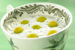 Herbal tea - camomile royalty free stock photos