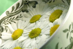 Herbal tea - camomile Royalty Free Stock Images
