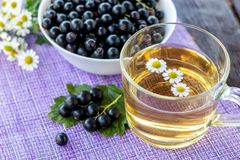 Herbal tea with camomile and fresh black currant berries, healthy drink concept, vitamins and farm food, violet background stock images