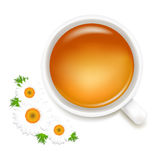 Herbal Tea With Camomile. Vector Stock Photos