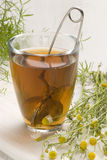Herbal tea. Camomille Stock Image