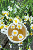 Herbal tea of a chamomile flowers Stock Photography
