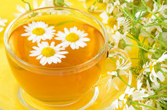 Herbal tea with chamomile flowers Stock Images
