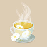 Herbal tea with chamomile Stock Images