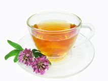 Herbal tea with clover extract Stock Photo