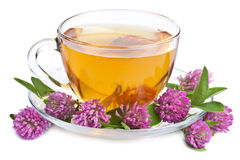 Herbal tea and clover flowers isolated Stock Image