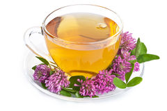 Herbal tea and clover flowers over white Royalty Free Stock Photos