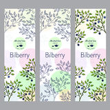 Herbal tea collection. Bilberry banner set Royalty Free Stock Photography