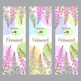 Herbal tea collection. Fireweed Royalty Free Stock Photos