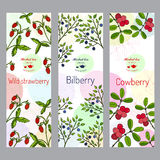 Herbal tea collection. Wild strawberry, bilberry, cowberry banner set Royalty Free Stock Photography