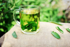 Herbal tea. Cup of fresh sage tea Stock Photos