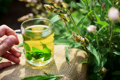 Herbal tea. Cup of fresh sage tea Royalty Free Stock Image
