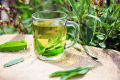 Herbal tea. Cup of fresh sage tea Royalty Free Stock Images
