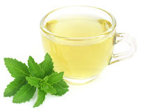 Herbal tea in a cup with stevia leaves Stock Images