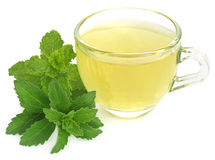 Herbal tea in a cup with stevia and mint leaves Royalty Free Stock Image