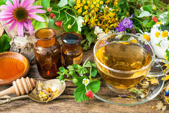 Herbal tea. Cup of herbal tea with wild flowers and various herbs stock images