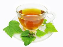 Herbal tea with currant extract Royalty Free Stock Photos