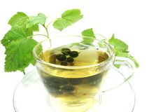Herbal tea with currant extract Stock Images