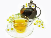Herbal tea with daisy flowers Royalty Free Stock Photos
