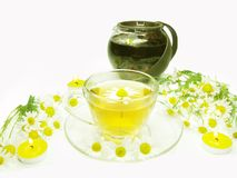Herbal tea with daisy medical flowers Stock Image