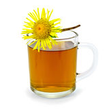 Herbal tea with elecampane in a glass mug Royalty Free Stock Photo