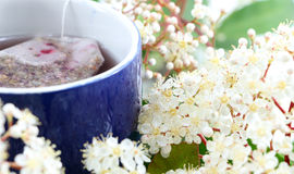 Herbal tea and flowers Royalty Free Stock Images