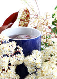Herbal tea and flowers Royalty Free Stock Photo