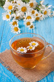 Herbal tea with fresh chamomile flowers on blue wooden background Stock Image