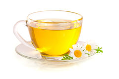 Herbal tea with fresh chamomile flowers  on white background Stock Images
