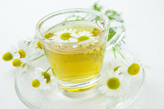 Herbal tea with fresh chamomile Stock Images