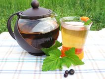 Herbal tea with fresh currant Royalty Free Stock Images