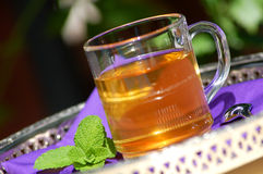 herbal tea with fresh mint Stock Images