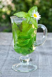Herbal tea. With fresh mint and melissa stock images