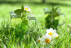 Herbal tea. With fresh mint and melissa in the grass Royalty Free Stock Photography