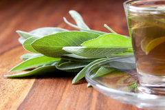 Herbal tea with fresh sage leaf on wooden flooring Royalty Free Stock Images