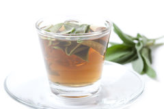 Herbal tea with fresh sage, white background, Stock Images