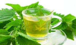 Herbal tea with fresh stinging nettle. On white background, fresh plants around Stock Image