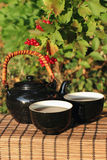 Herbal tea  in a garden Stock Photography
